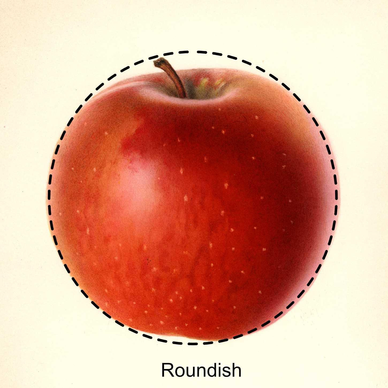 round apple