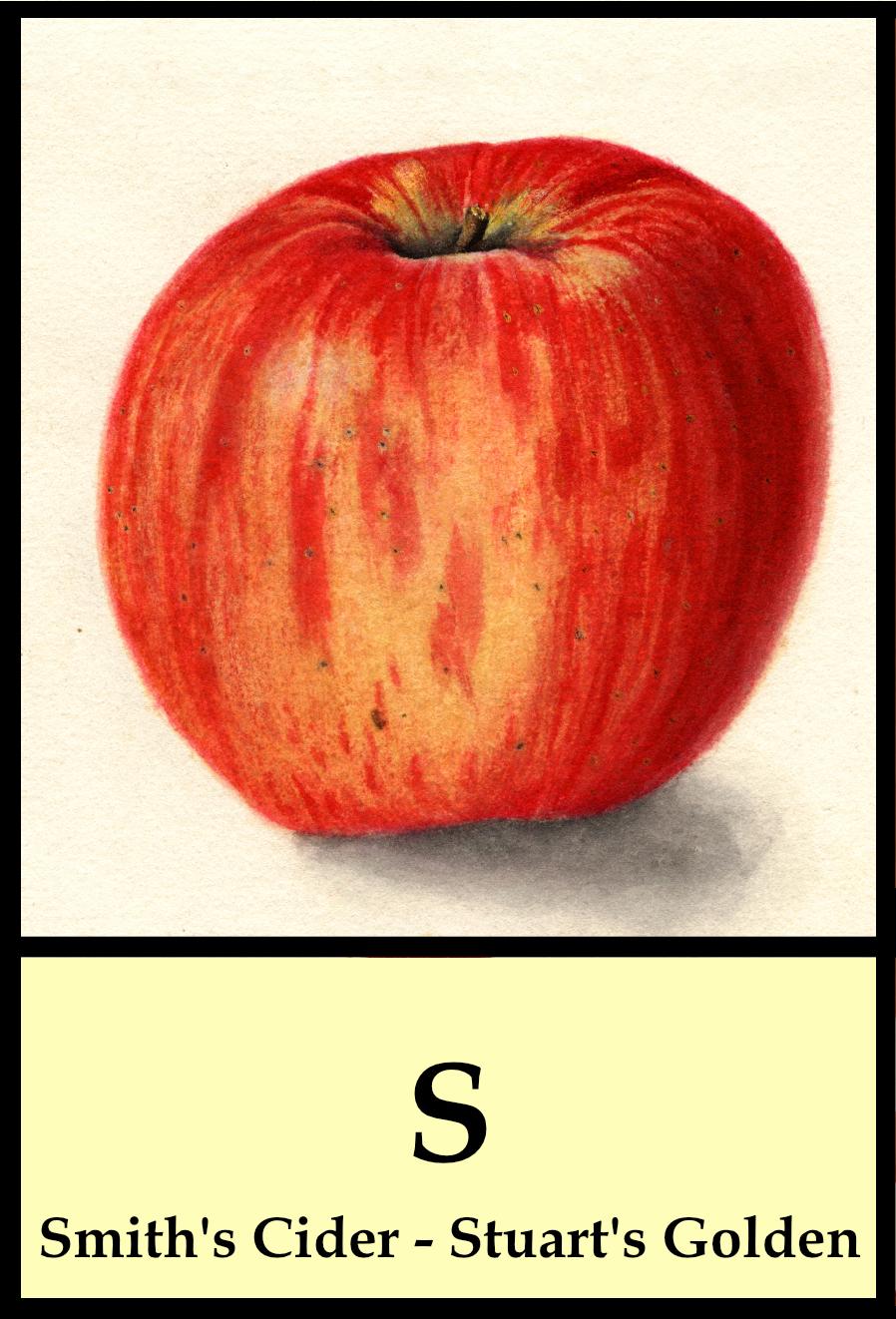 S apples - Smith's Cider to Stuart's Golden