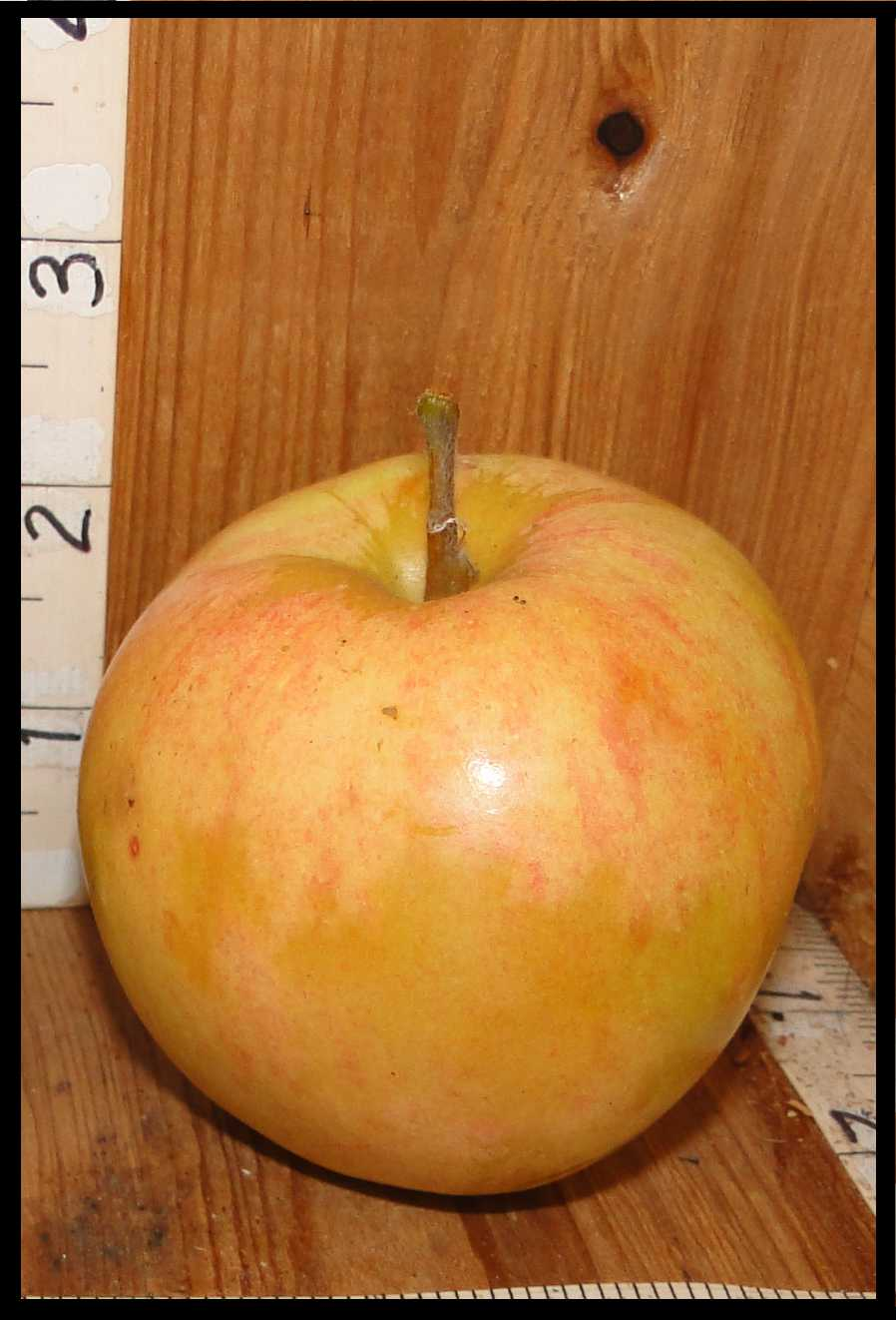 yellow apple almost white with faint streaks of pink