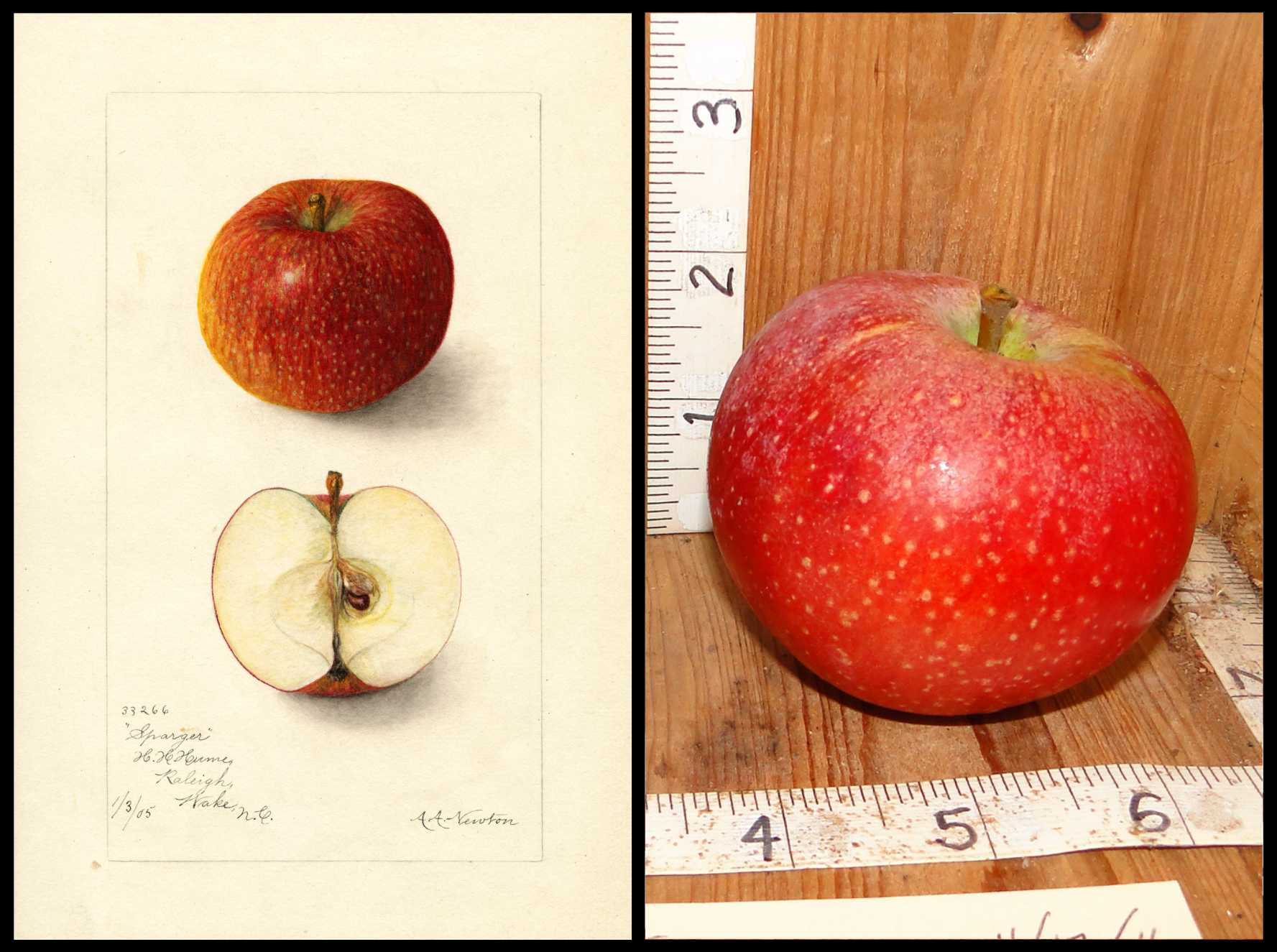 red apple with medium sized white spots