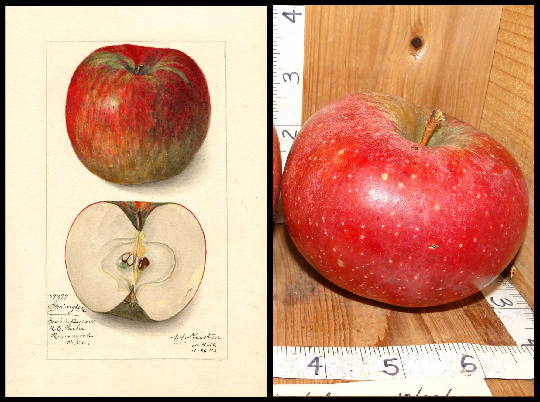 red apple with small to medium sized white dots