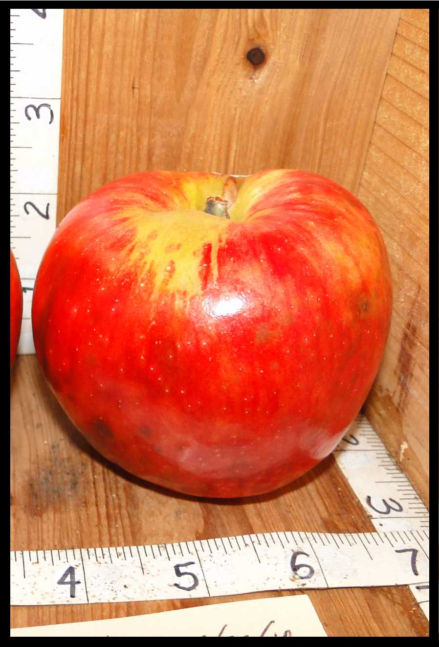 red apple with yellow around the stem and streaking down the sides of the fruit