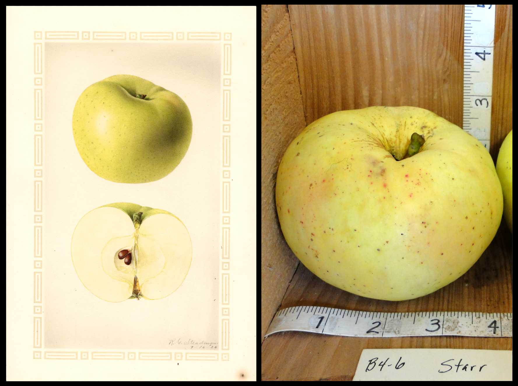 pale yellow apple with small red dots