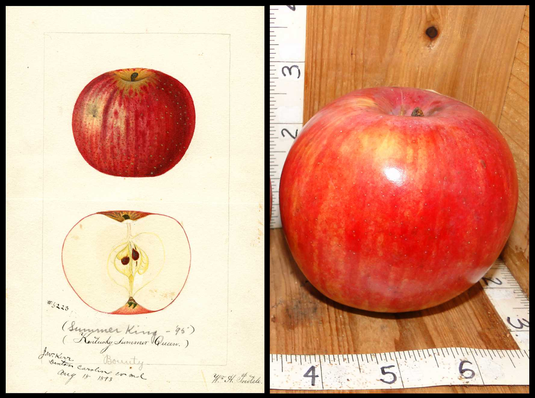 shiny red apple with small patches of yellow