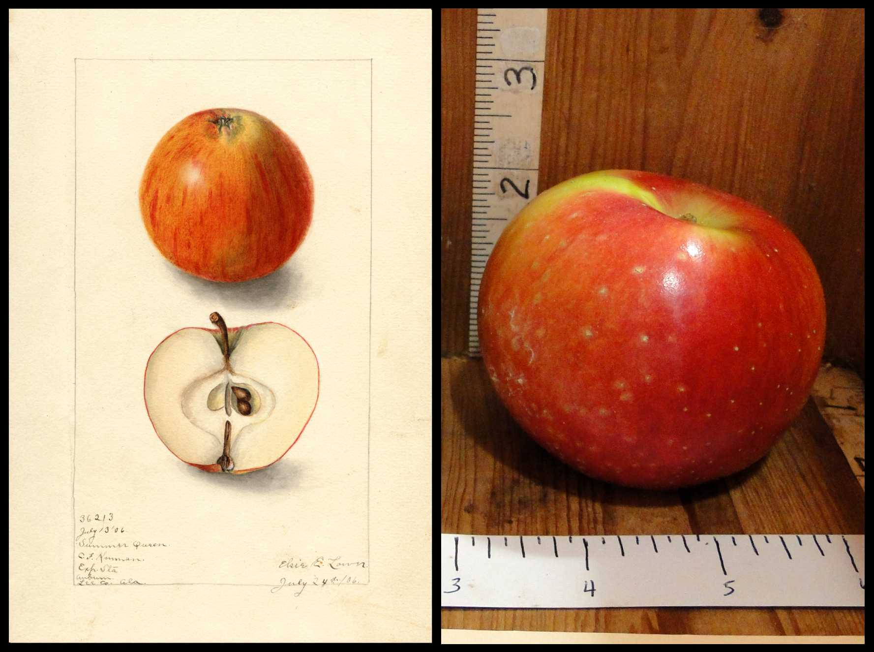 red apple with small white dots and a patch of green skin