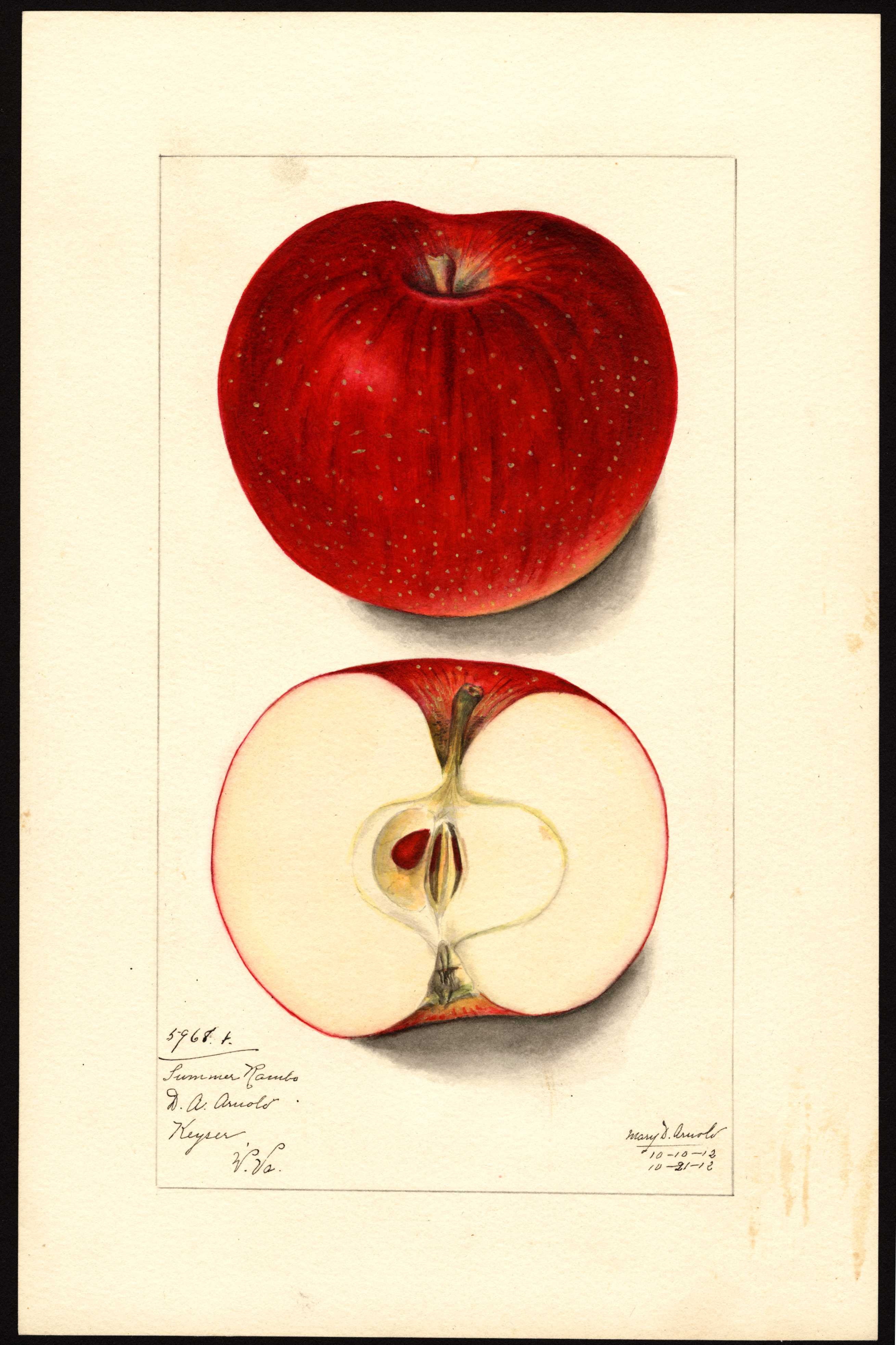 watercolor of a red apple with darker red stripes