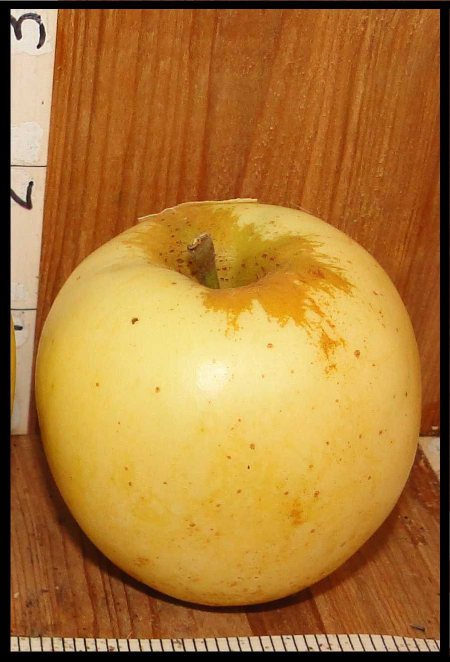 pale yellow apple with scattered small brown dots and rough tan skin around stem