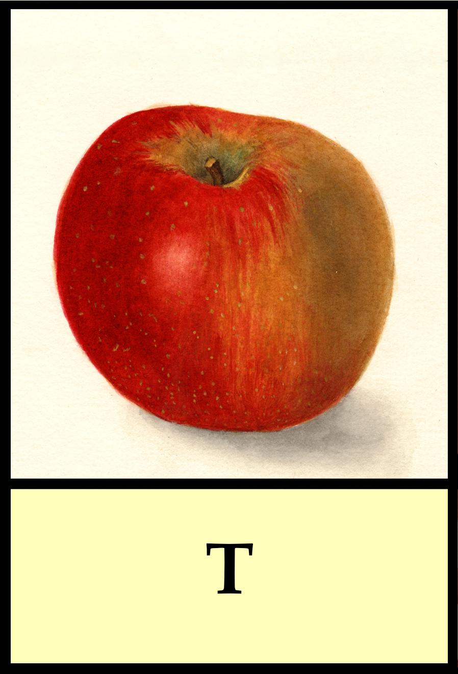 T apples