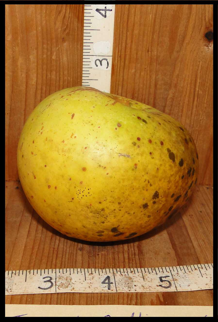green apple with large brown spots