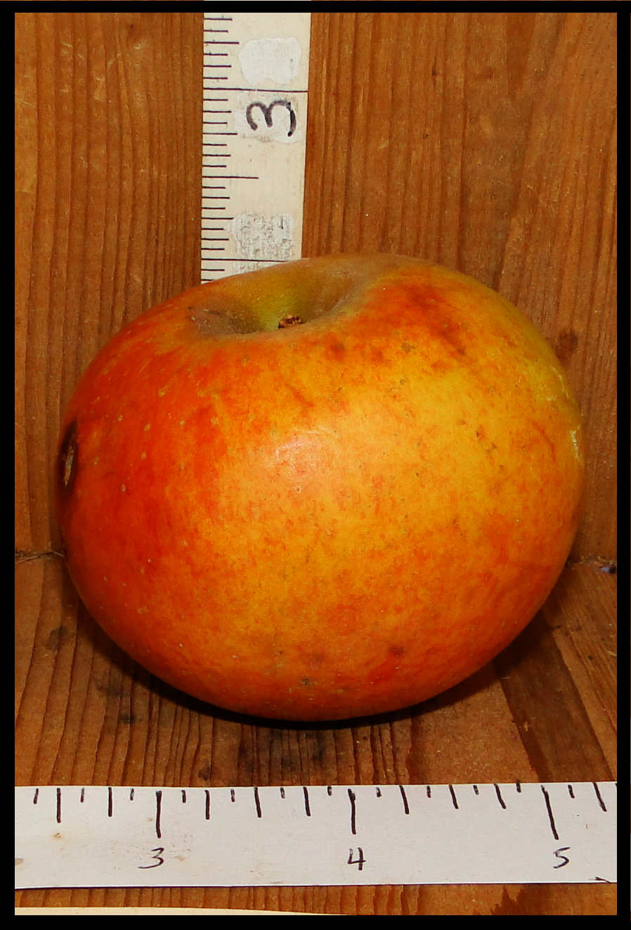 mottled red and orange apple