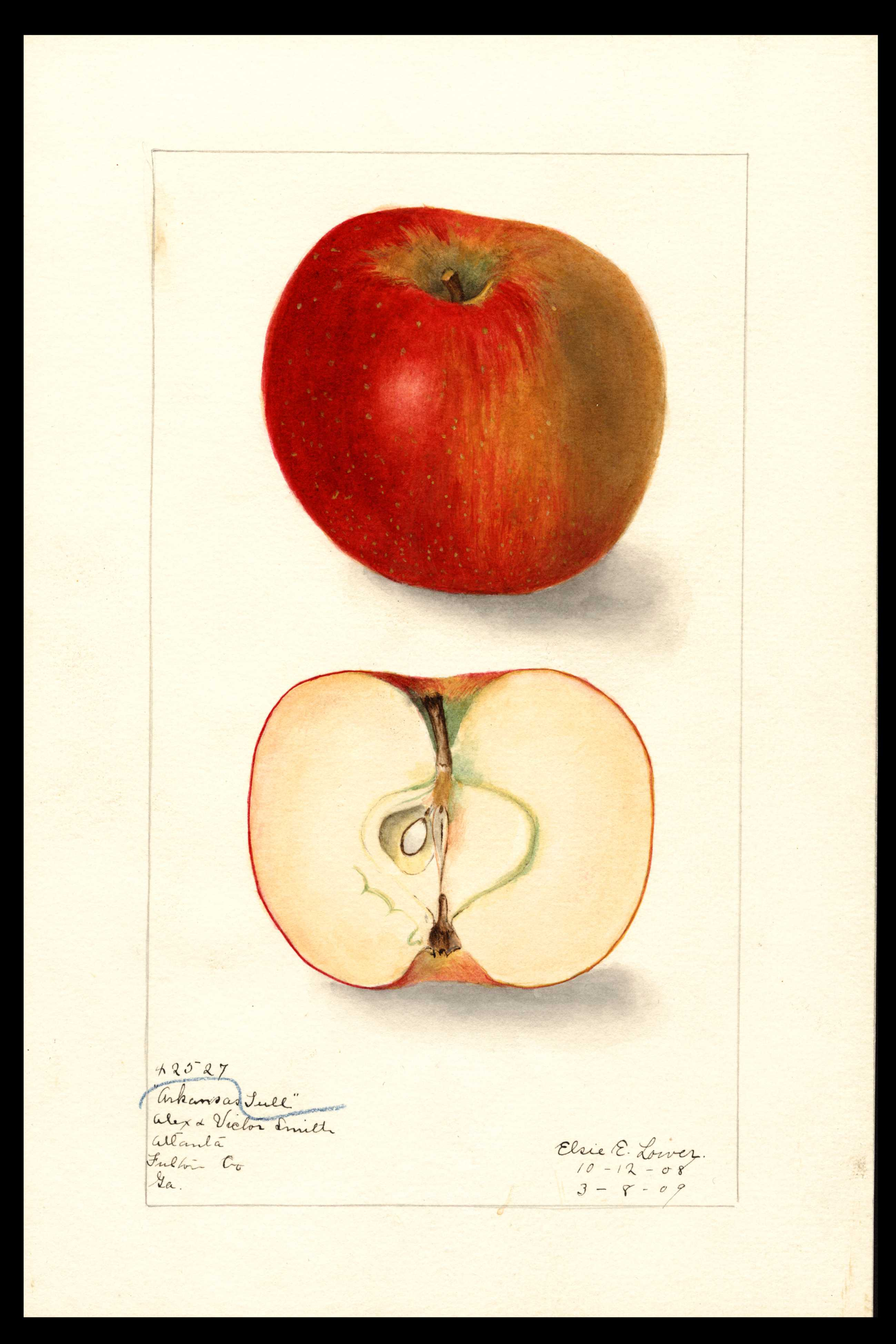 watercolor of a red apple with a large brown patch