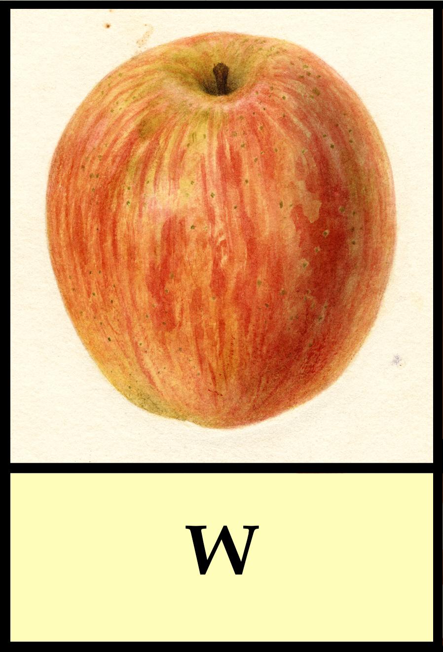 W apples