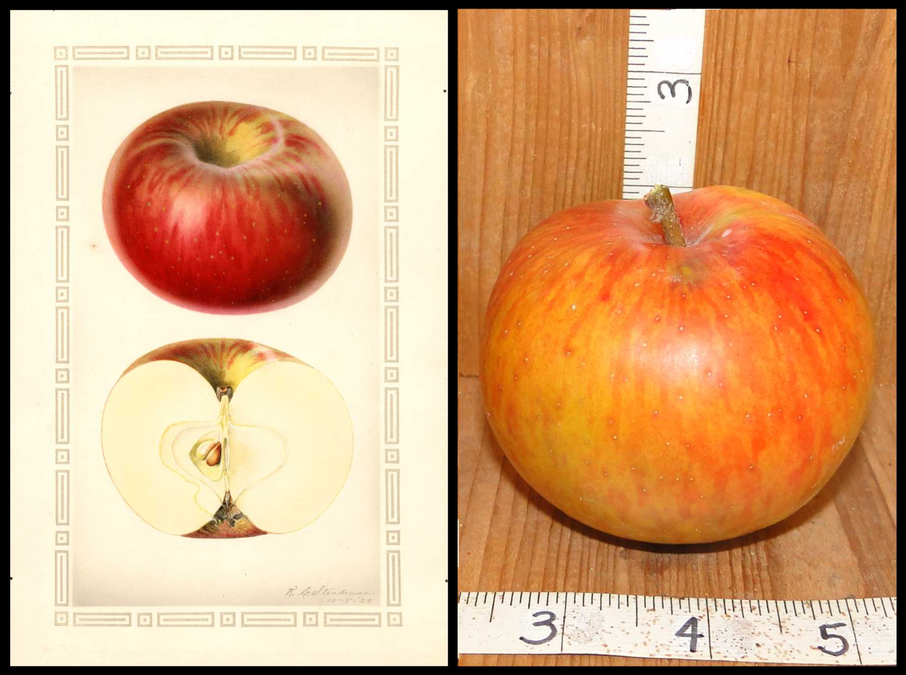 yellow apple with red and orange patches and stripes