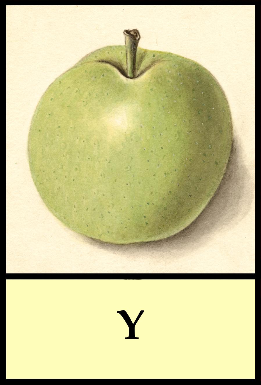 Y apples