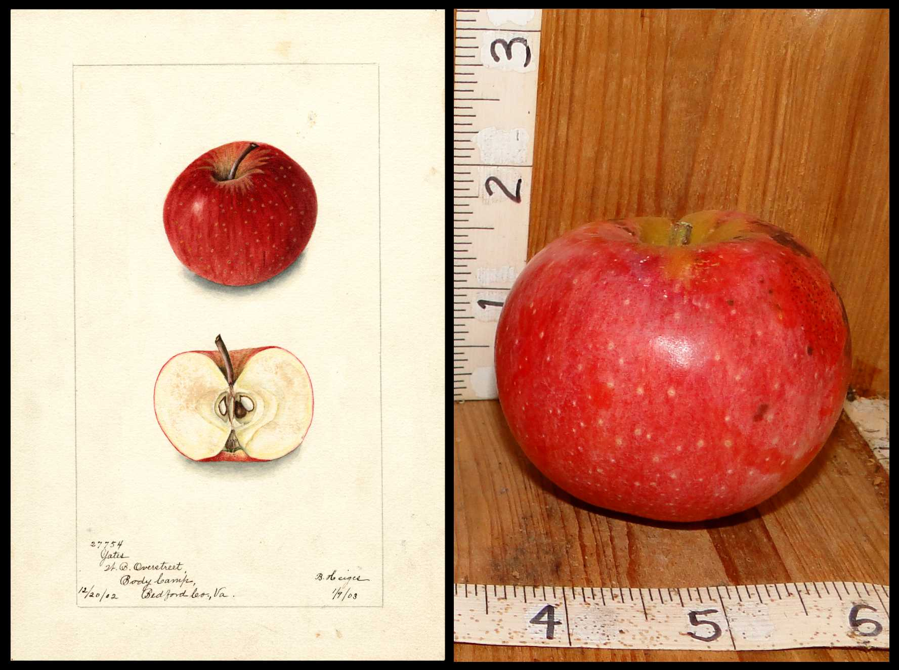 red apple with medium white dots