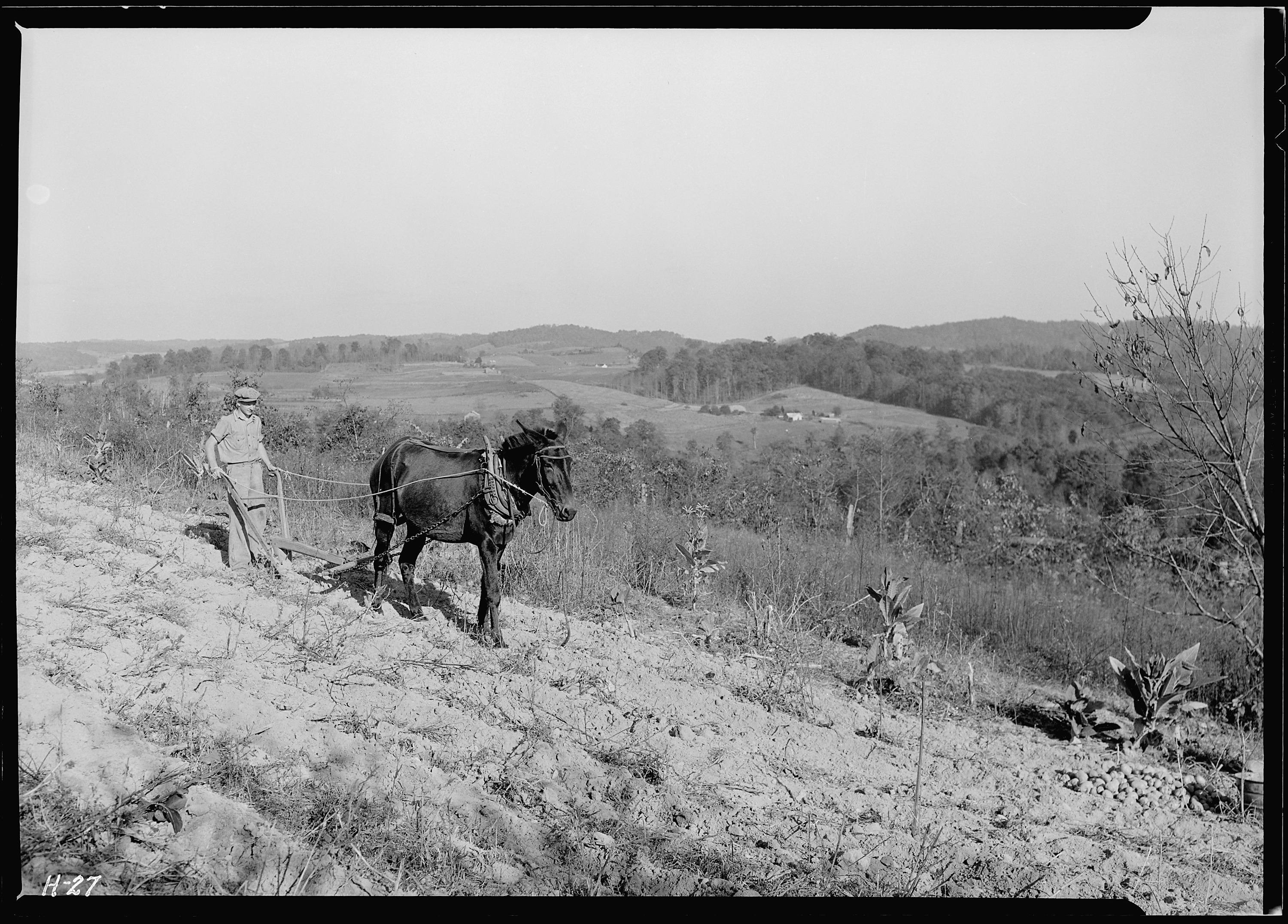 antique photography of a boy with a mule drawn plow on a hillside