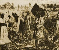 engraving of enslaved laborers