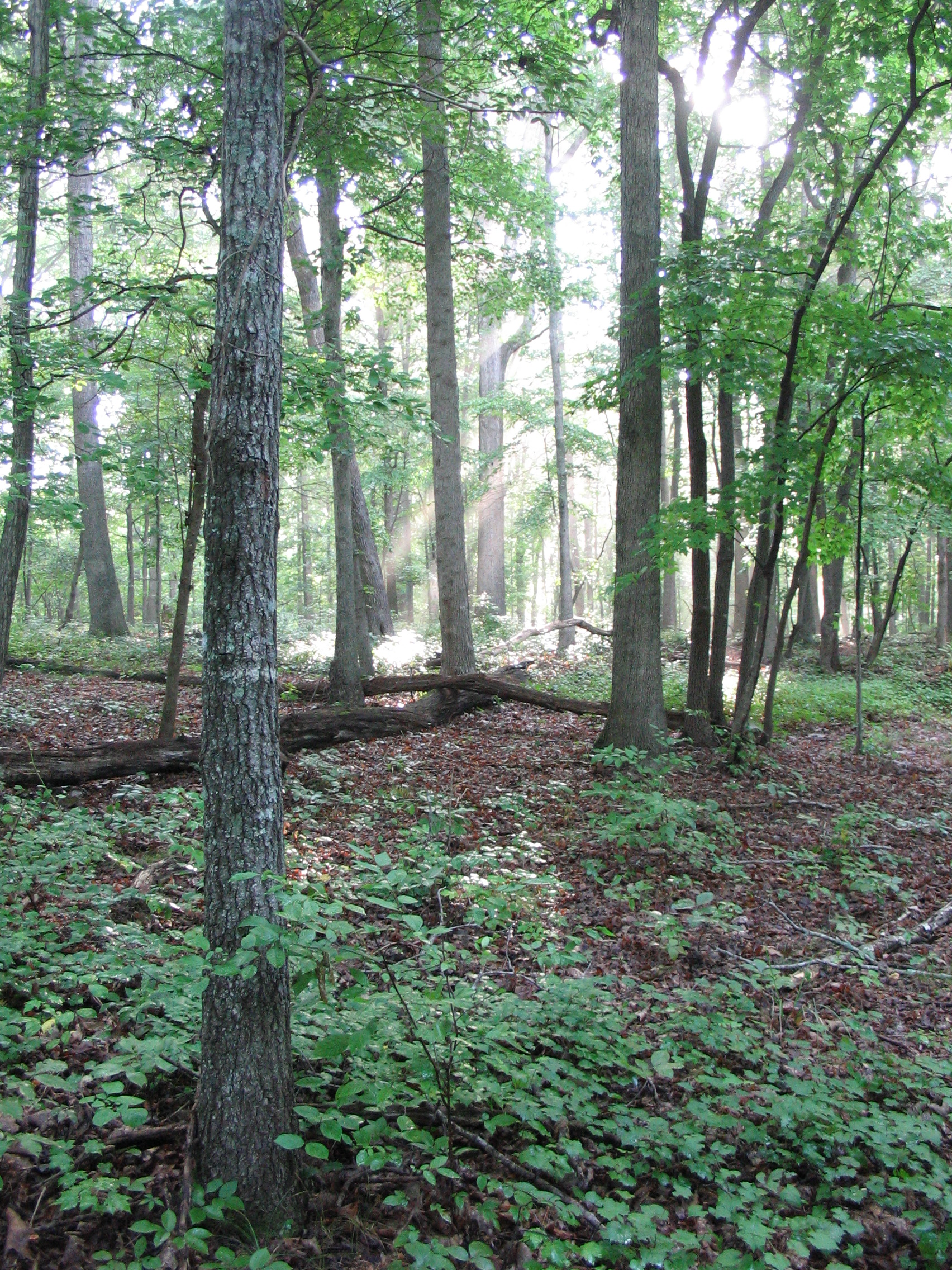 Basic Oak-Hickory Forest at Falls Dam Slope SNHA by Michael Schafale