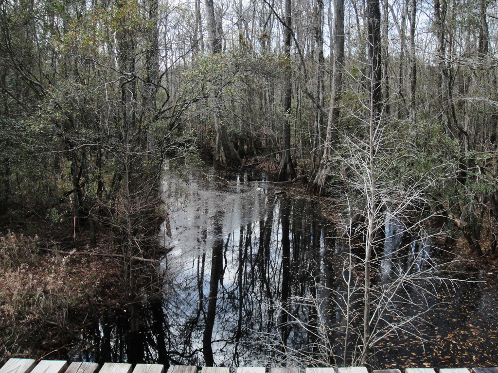 Sandy Run Swamp by Amin Davis