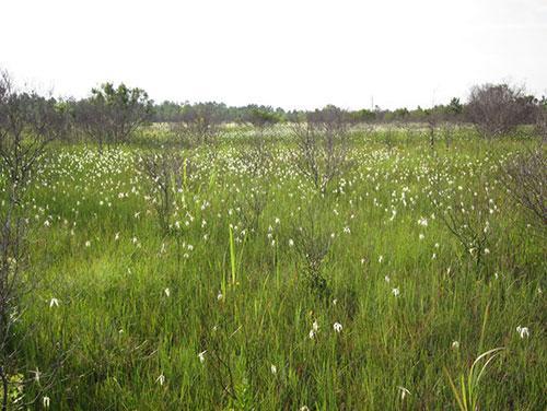 Sandy Run Savannas State Natural Area