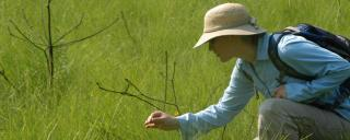 Identifying plants at Green Swamp by Dan Wall