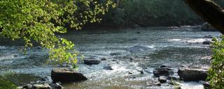 Lower Haw River by Elaine Chiosso