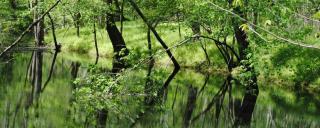 Roanoke River Tributary by Jim Hawhee