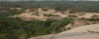 Run Hill Dunes by Misty Buchanan