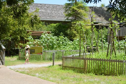 Girl walking in the American Indian Town garden at Roanoke Island Festival Park