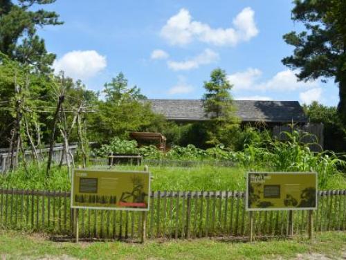 Garden area in American Indian Town at Roanoke Island Festival Park