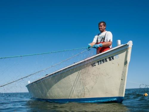 Photo of fishermen reeling in fishing net taken by Outer Banks photographer, Daniel Pullen