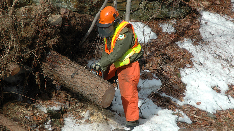 A Hanging Rock State Park maintenance mechanic chops down a fallen tree using a chainsaw.