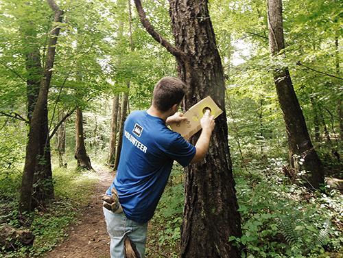 A volunteer paints blazes along a trail.