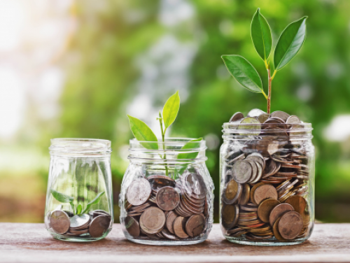 Photo showing three glass jars with coins and seedlings that are growing