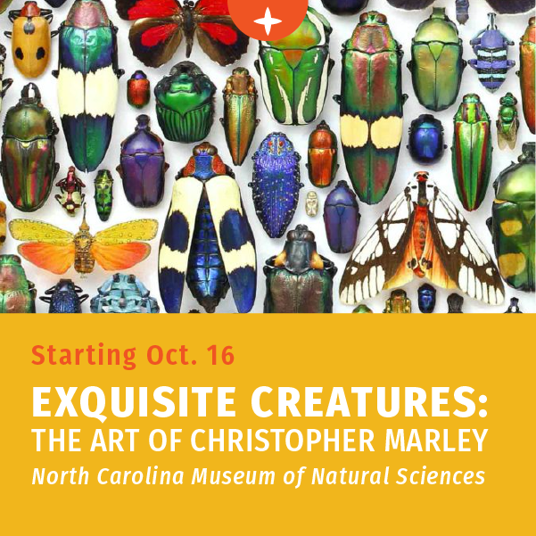 Starting October 16 - Exquisite Creatures: The Art of Christopher Marley at the North Carolina Natural Science Museum