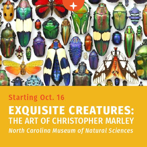 从10月16日开始——精美的生物:克里斯托弗·马利的艺术在北卡罗来纳自然科学博物馆