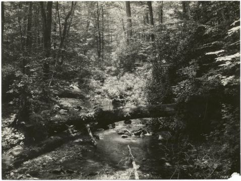 Kimsey Creek in the Macon County portion of Nantahala National Forest. Image from the New York Public Library.