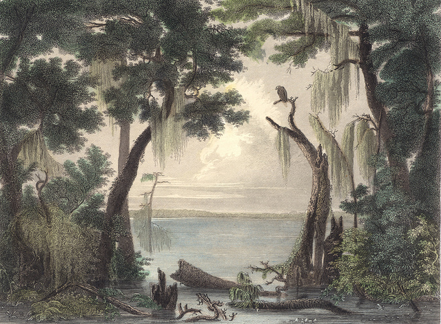 illustration of the great dismal swamp