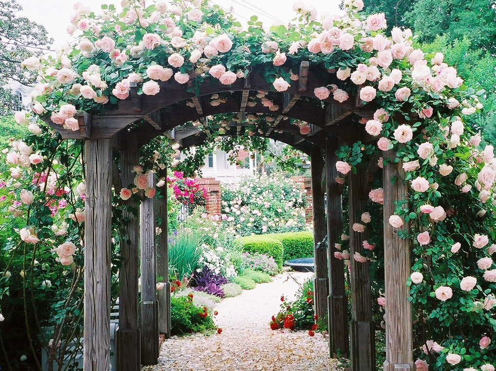 Executive Mansion Rose Pergola