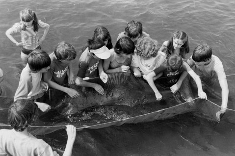 Kids enjoy an aquarium program in the 1970s. Image from the N.C. Aquarium at Pine Knoll Shores.