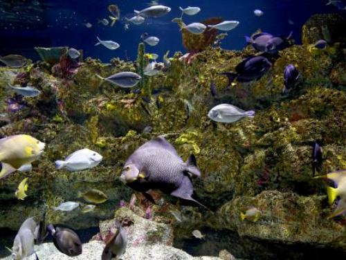 The Shark Tooth Ledge habitat at the N.C. Aquarium at Fort Fisher