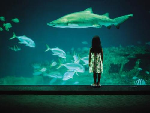 Watching the world go by at one of North Carolina's three aquariums