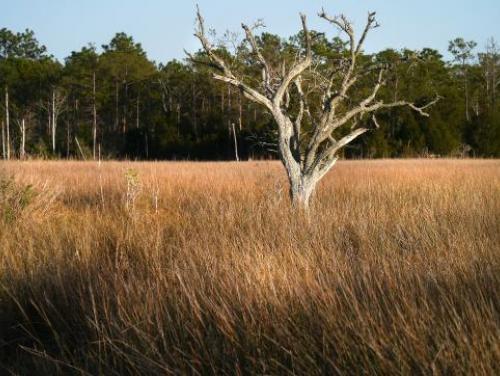 Marshland at Carolina Beach State Park