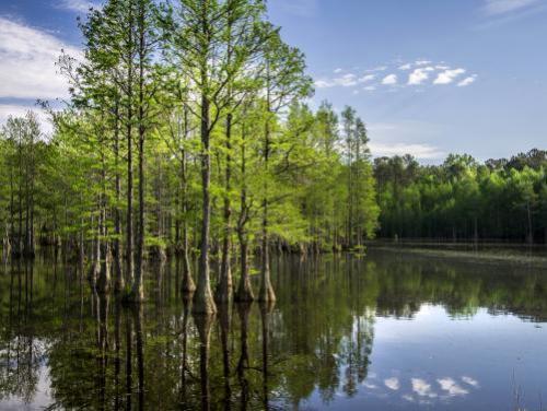 Swampland at Carvers Creek State Park
