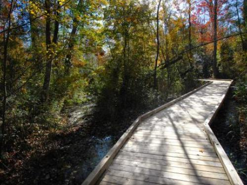 A trail through swampland at Dismal Swamp State Park