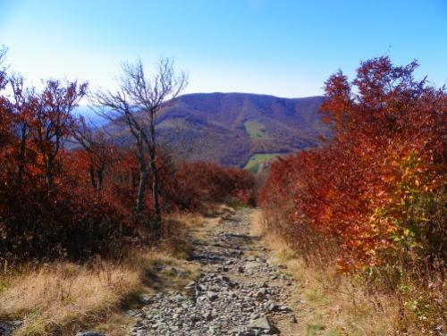 A hiking trail at Elk Knob State Park
