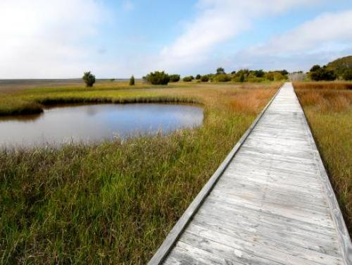The Basin Trail at Fort Fisher State Recreation Area