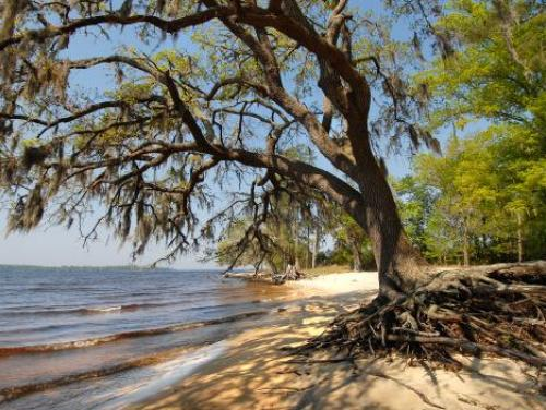 A sandy beach at Goose Creek State Park