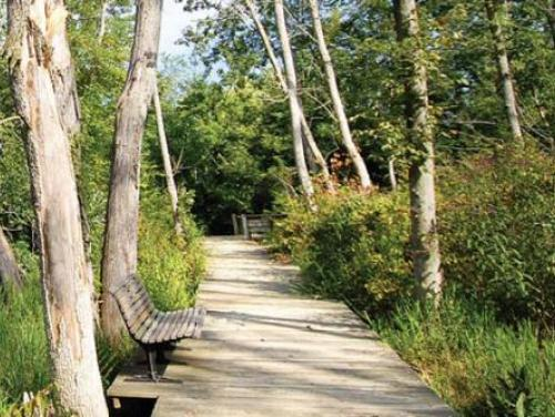 A boardwalk through wetlands at Haw River State Park