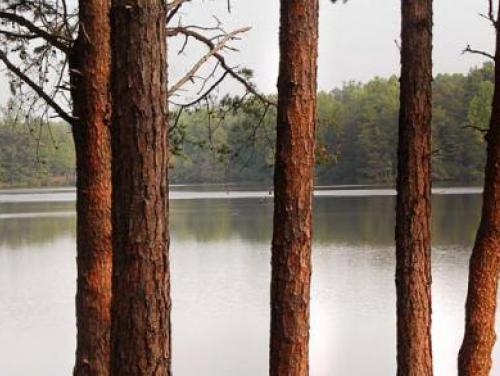 Lake Norman as seen through a grove of a trees